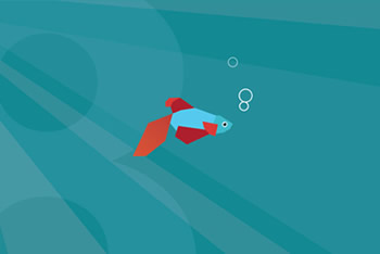 win8bettafish_large.jpg